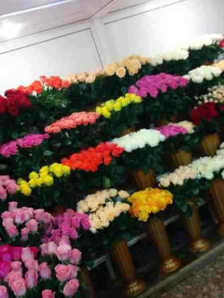 Купить розы оптом в пятигорске зеленый слон служба доставки цветов москва