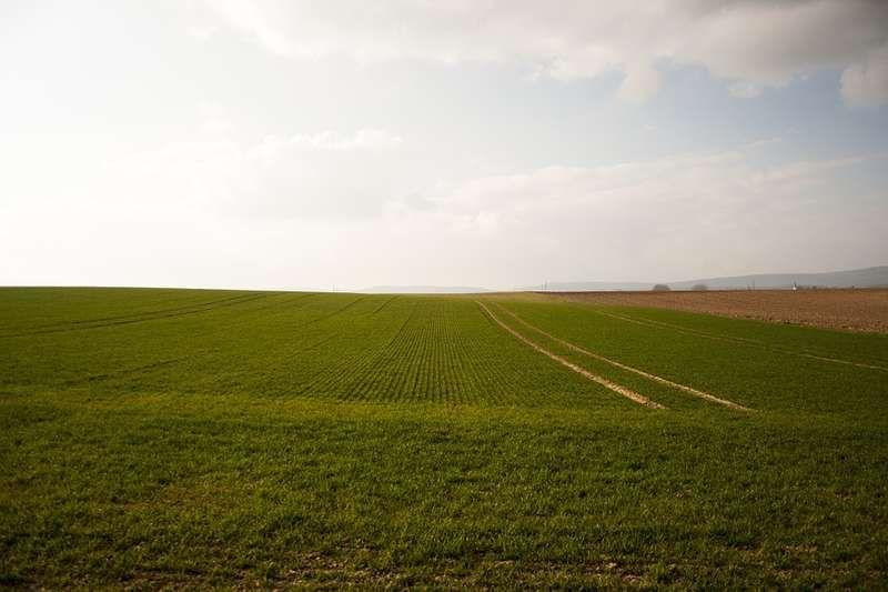 аренда земельных участков из земель сельскохозяйственного назначения