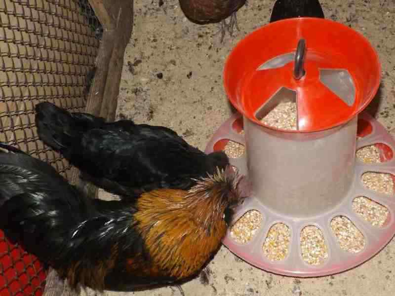 Кормушки для домашней кур своими руками