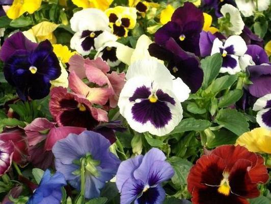 Купить цветы кандалакша