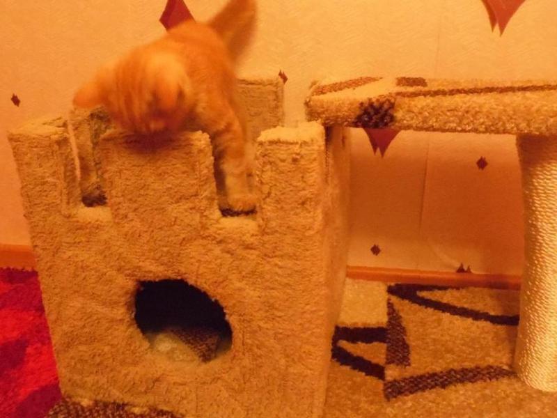 Брит Премиум влажный корм для котят курица (пауч)