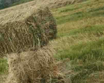 Продажа тюковое сено к кореновске 108