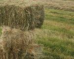 Продажа тюковое сено к кореновске 23
